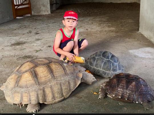 2017-07-09 小小烏龜飼養員