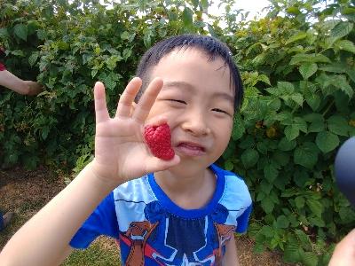 溫哥華u-pick Raspberry@親子活動好去處