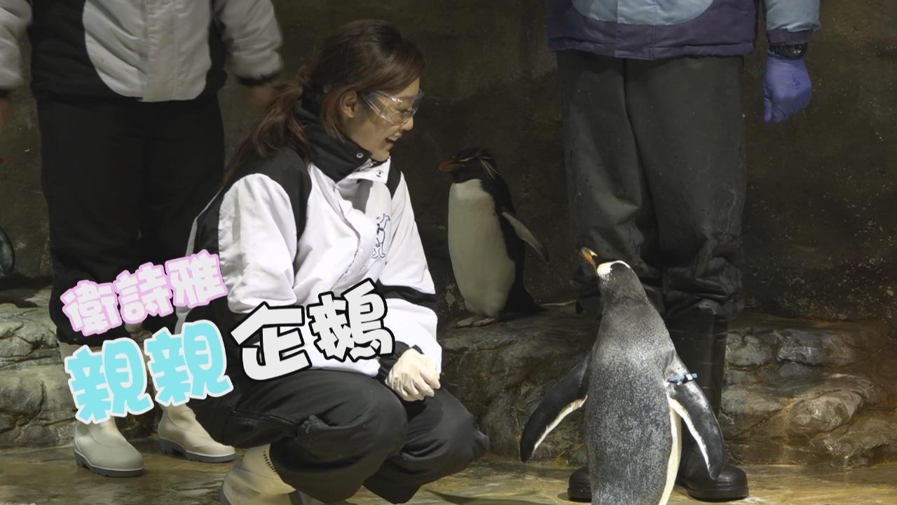 衛詩雅親親企鵝