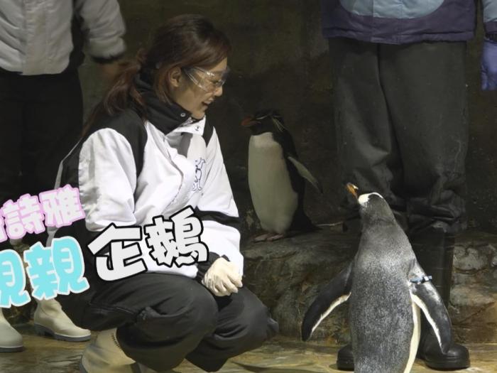 衛詩雅 親親企鵝