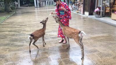 京都?穿和服的好地方