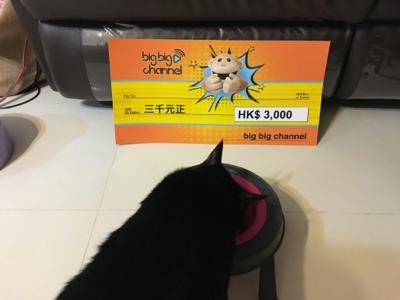 刀疤有錢買貓糧啦