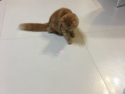 不共戴天的貓玩具