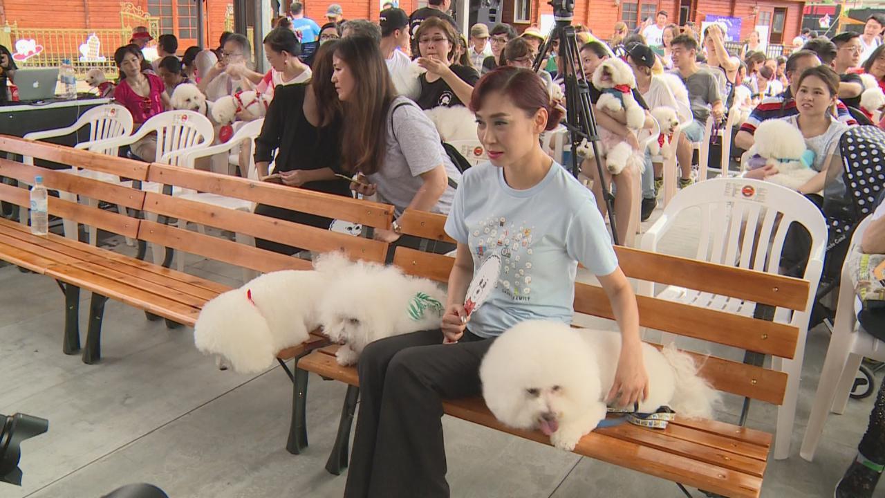 鄺美雲攜愛犬出席活動 聚集逾二百隻比熊犬創世界紀錄