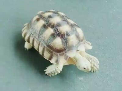 Benny Lo路上遇到龜