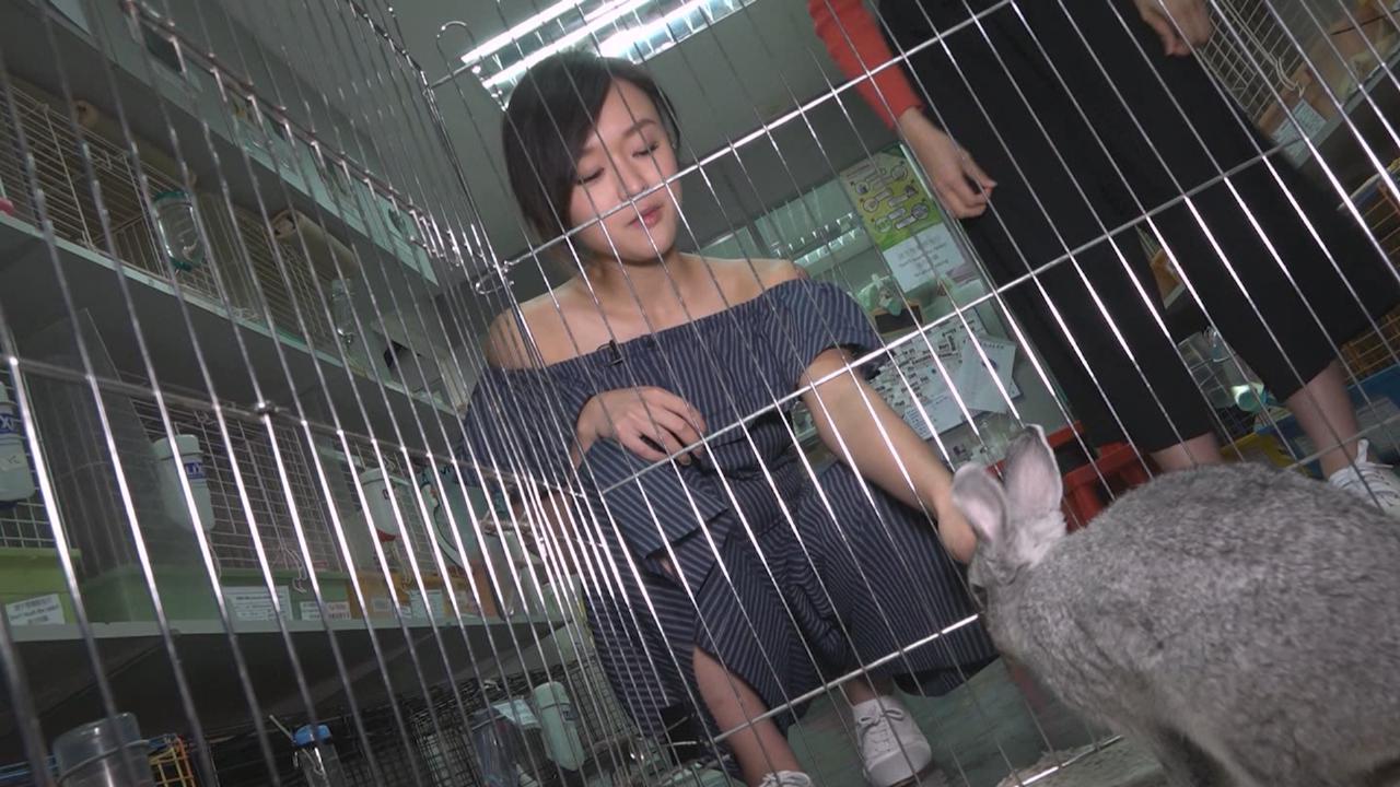陳明憙探兔仔