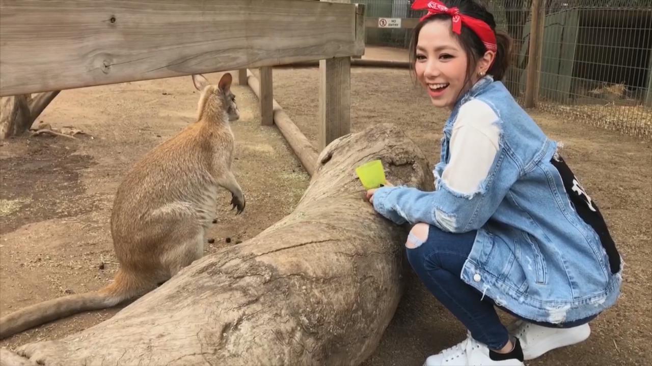 鄧紫棋澳洲開騷趁機觀光 與粉絲導遊遊覽當地景點