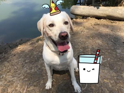 2017-11-29 Hardos退休導盲犬的直播