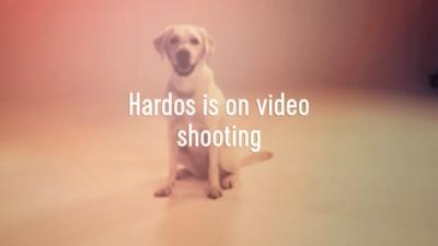 Hardos退休導盲犬?上鏡啦⋯⋯