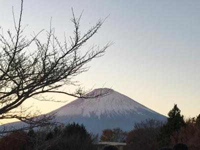 Tobey在日本