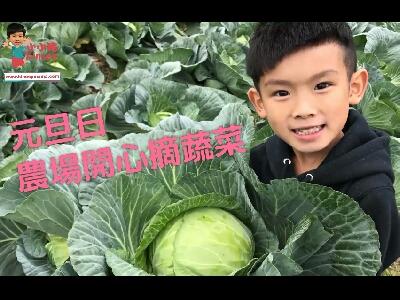 小小豬玩樂篇 - 農場開心摘蔬菜