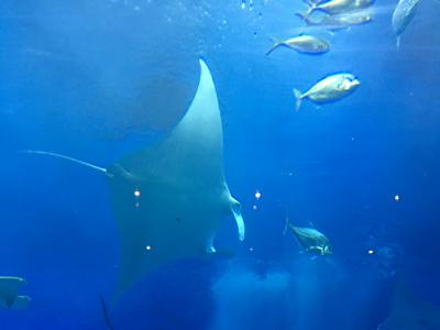 沖繩美麗水族館