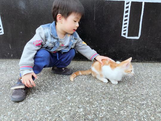 台灣親子遊-猴硐貓村