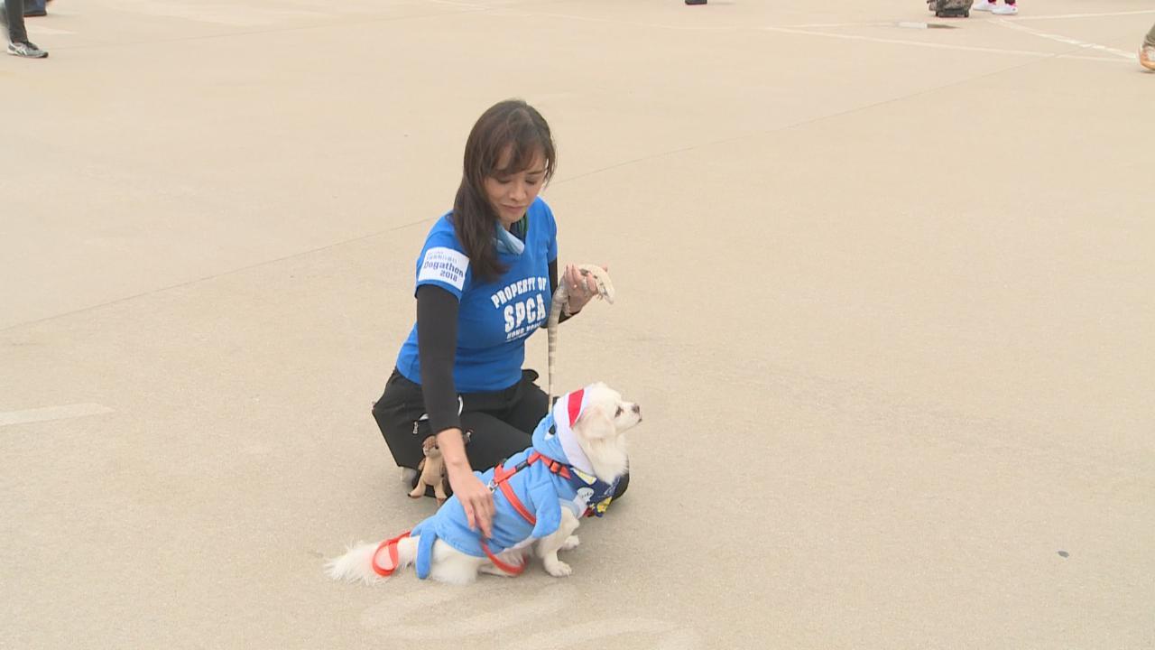(國語)郭秀雲帶寵物出席慈善活動 望公眾認識爬蟲類動物