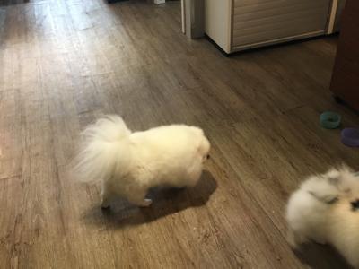 HANA 今天帶狗狗回公司