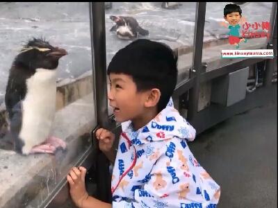 小小豬北海道篇 - 旭山動物園