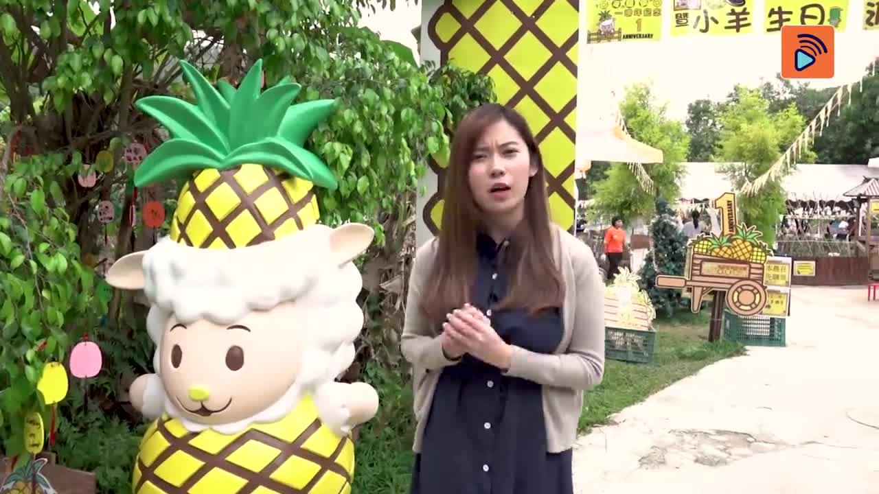 【後生仔創吓業 精華版】波波搵菠蘿考察記