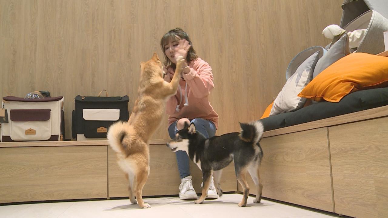 (國語)香港有什麼寵物生活館