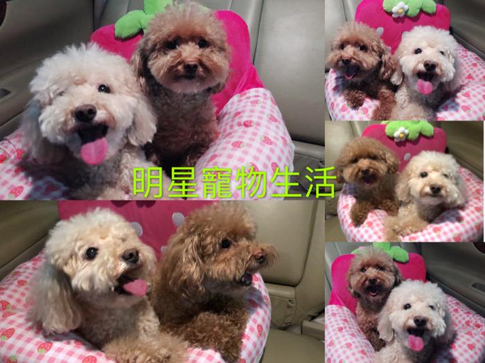 gary gor gor 明星寵物生活 紅棗、荔枝 part 2