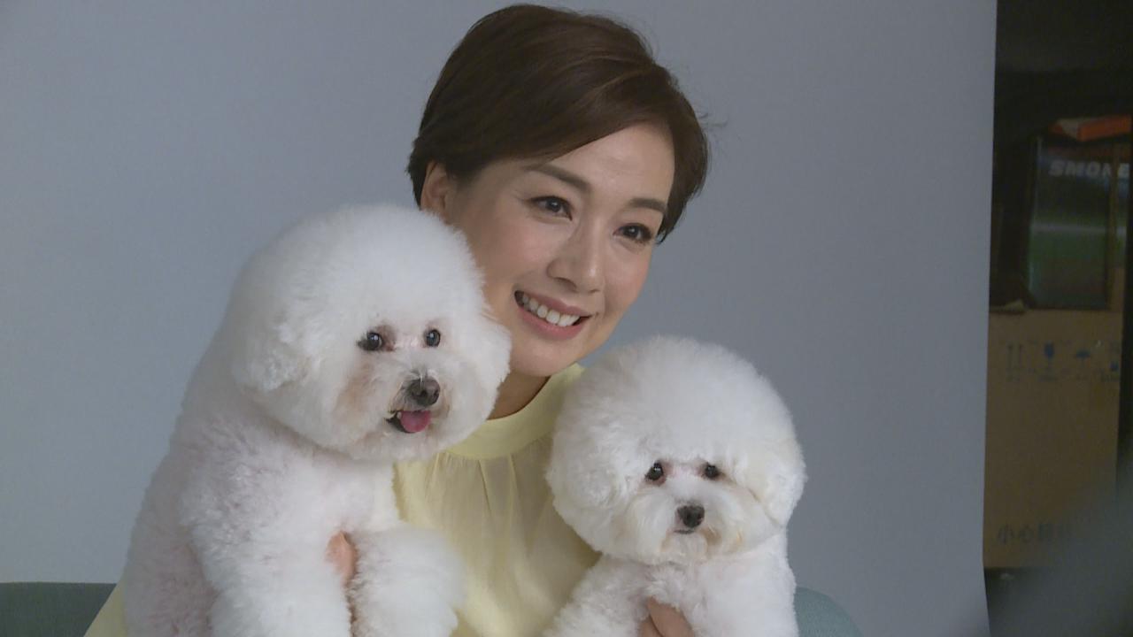 (國語)攜兩隻愛犬齊齊拍廣告 江美儀笑言榮升星媽