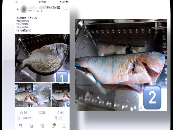 蠱惑招賣標本魚