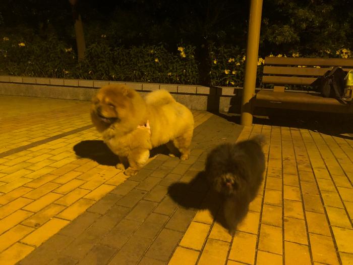 阮兒@dog walk