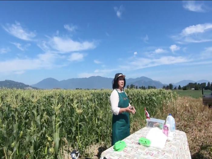 即摘粟米有幾甜?