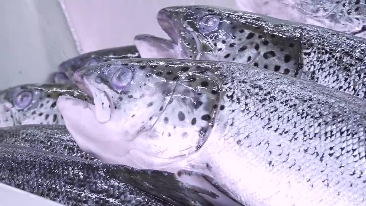 香港原味道 挪威煙三文魚