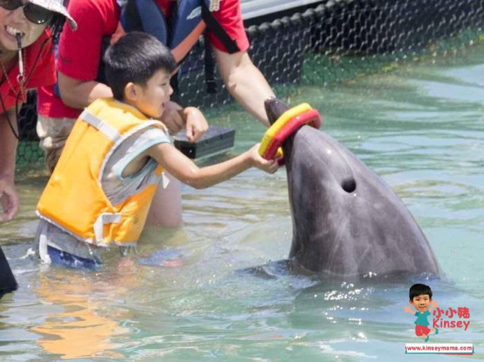 小小豬沖繩篇 - 親親小海豚