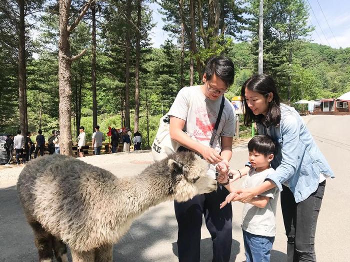 韓國親子遊