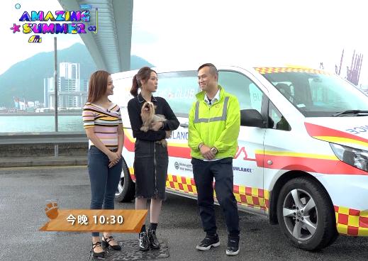 第 5 集:寵物救護車服務