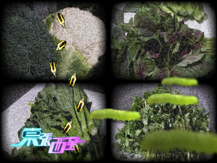 食咗菜蟲大件事(預告篇)