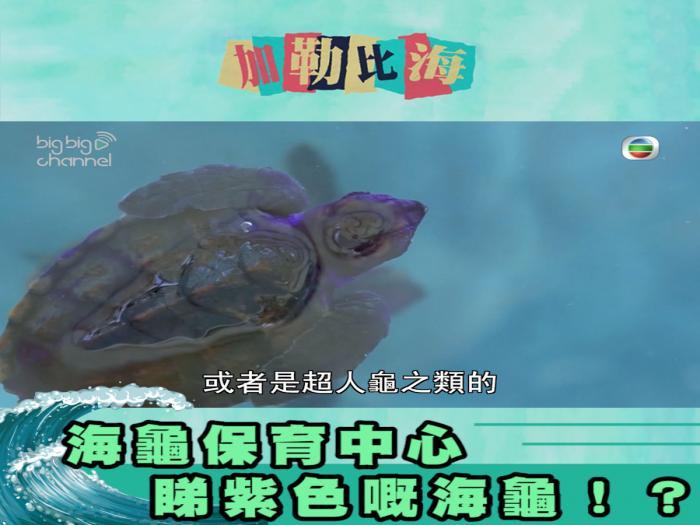 海龜保育中心 睇紫色嘅海龜!?