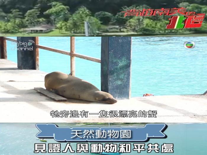 天然動物園 見證人與動物和平共處