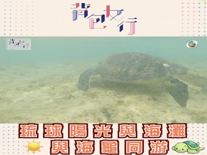 琉球陽光與海灘 與海龜同游