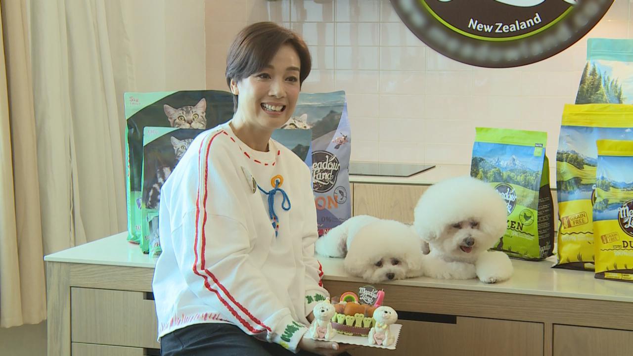 江美儀愛犬拍廣告 笑言賺錢買補品兼救助毛孩