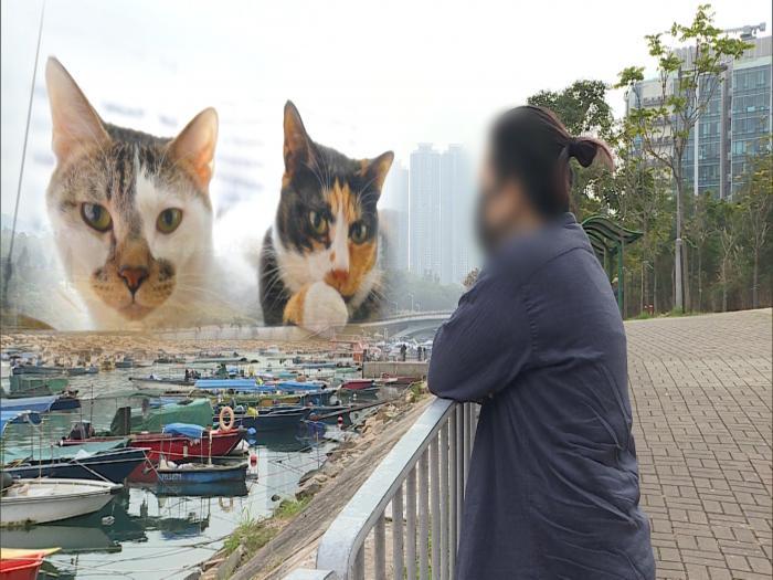 失貓變虐貓 離奇羅生門(I)