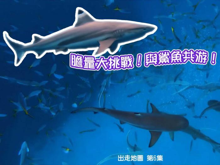 膽量大挑戰!與鯊魚共游!