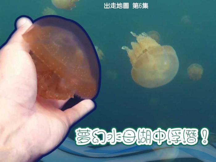 夢幻水母湖中浮潛!