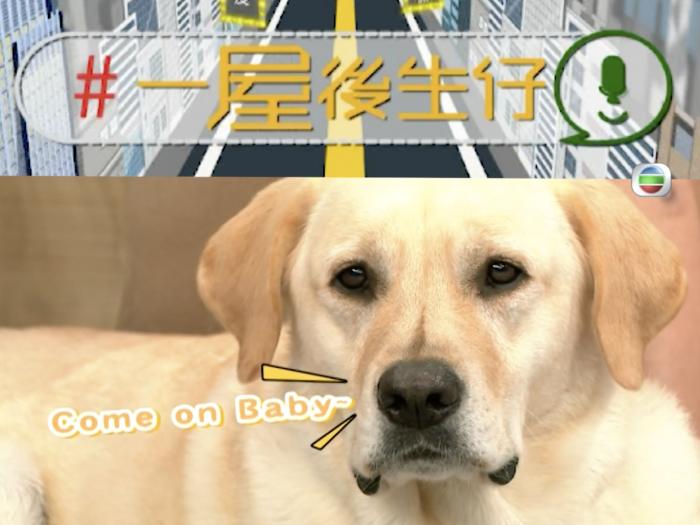 狗狗唔聽話?教你幾招馴服狗狗!