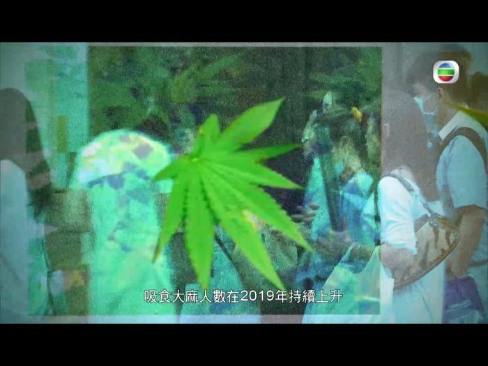 【東張西望】 大麻 = 毒品