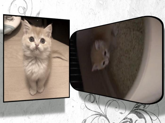 買愛貓變買病貓 貓奴揭發寵物店惡行 誓要為亡貓討回公道