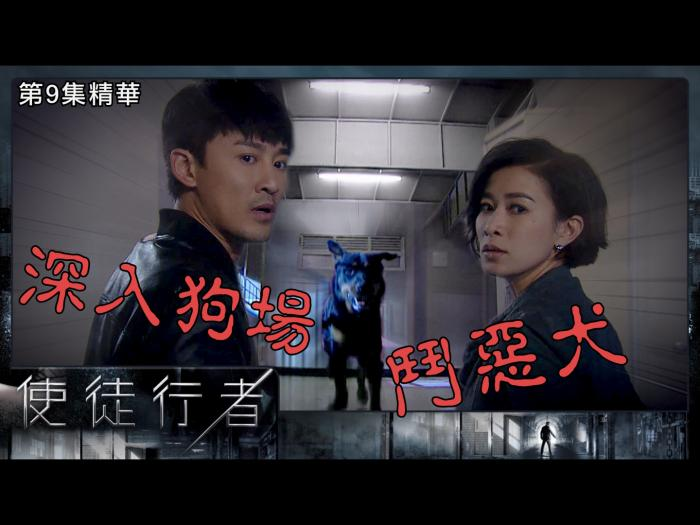 第9集精華  深入狗場鬥惡犬