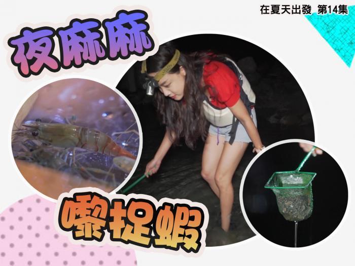 夜麻麻 嚟捉蝦