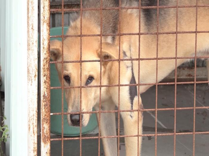坪輋動物收容中心被罰巨款面臨關閉 政府部門彈弓手 200貓狗恐被人道毀滅