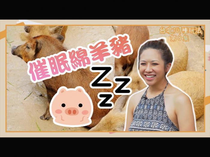催眠綿羊豬