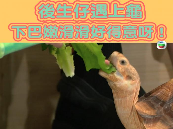 後生仔遇上龜!