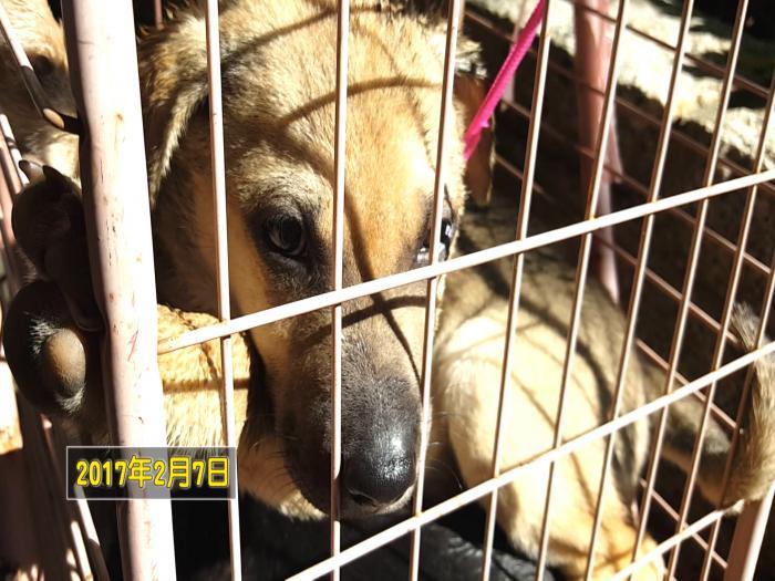街頭非法買賣狗隻 違法更播疫