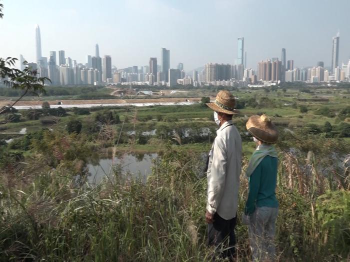 河套區收地農作物魚塘被毀零賠償 葉伯夫婦有冤無路訴