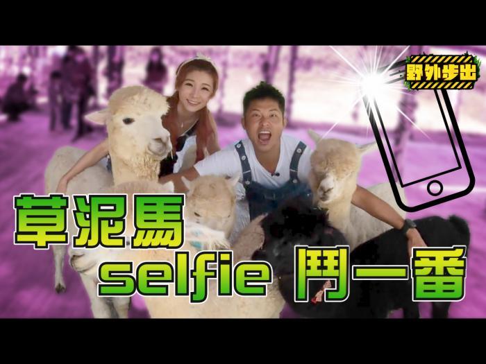草泥馬selfie 鬥一番